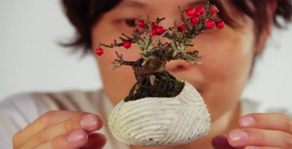 air-bonsai-fb2