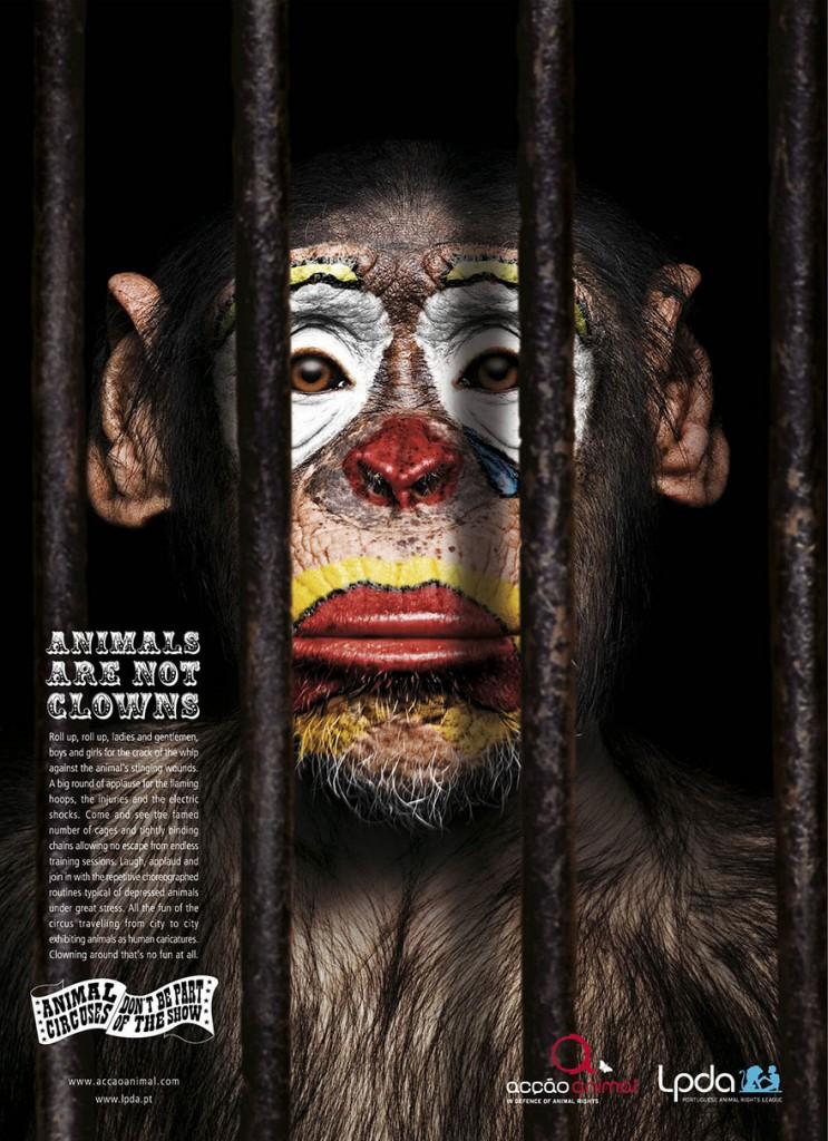 animal-abuse-2