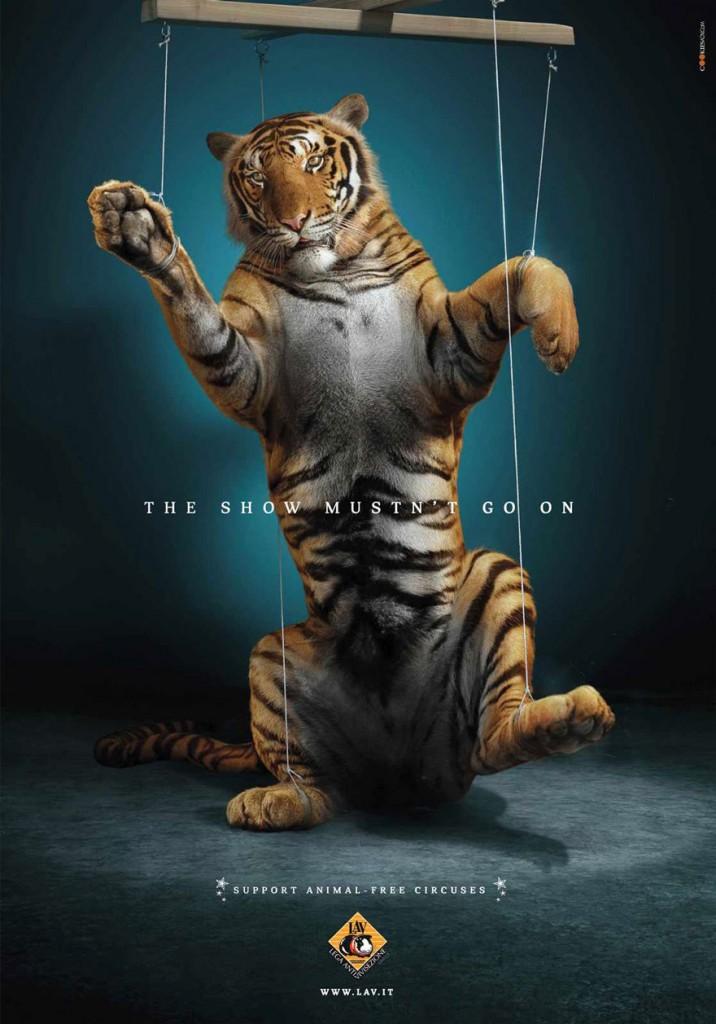 animal-abuse-57
