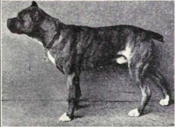 dog-breeds-100-years-apart-1