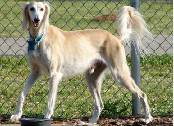 dog-breeds-100-years-apart-10b