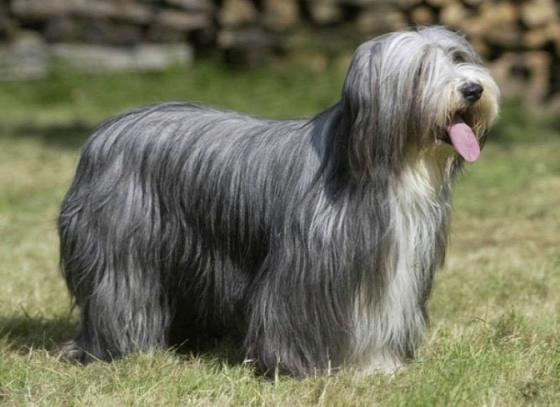 dog-breeds-100-years-apart-11b