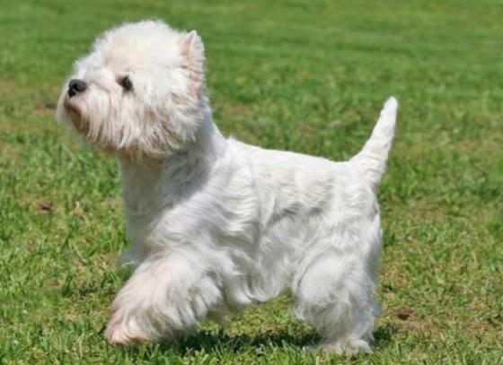 dog-breeds-100-years-apart-2b