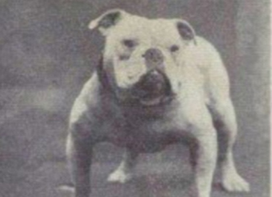 dog-breeds-100-years-apart-3b
