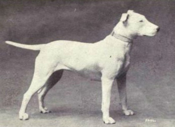 dog-breeds-100-years-apart-4