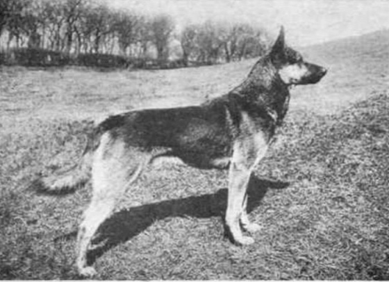 dog-breeds-100-years-apart-5