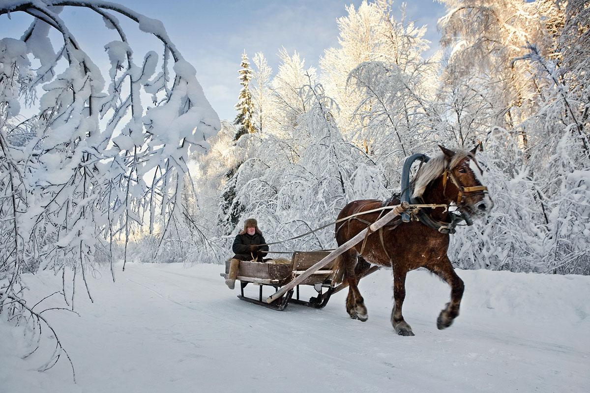 Viktor mit seinem Pferdeschlitten auf dem Weg von Zukunft nach Timkova im maerchenhaft verschneiten Wald