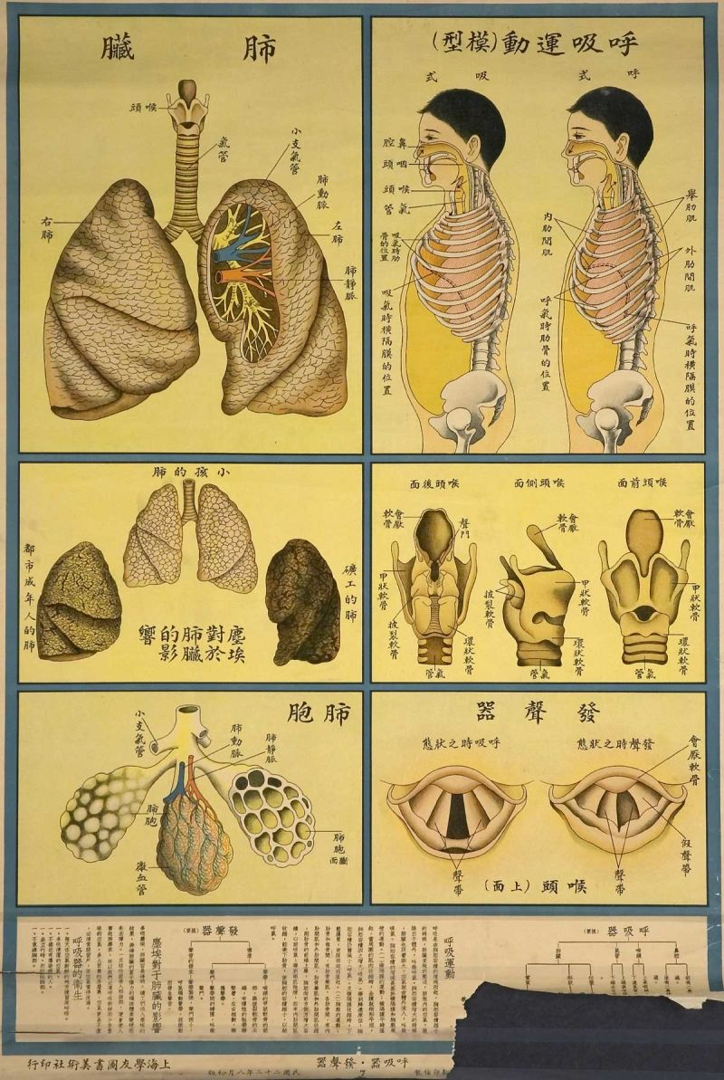The Human Body Industrial Factory Chinese