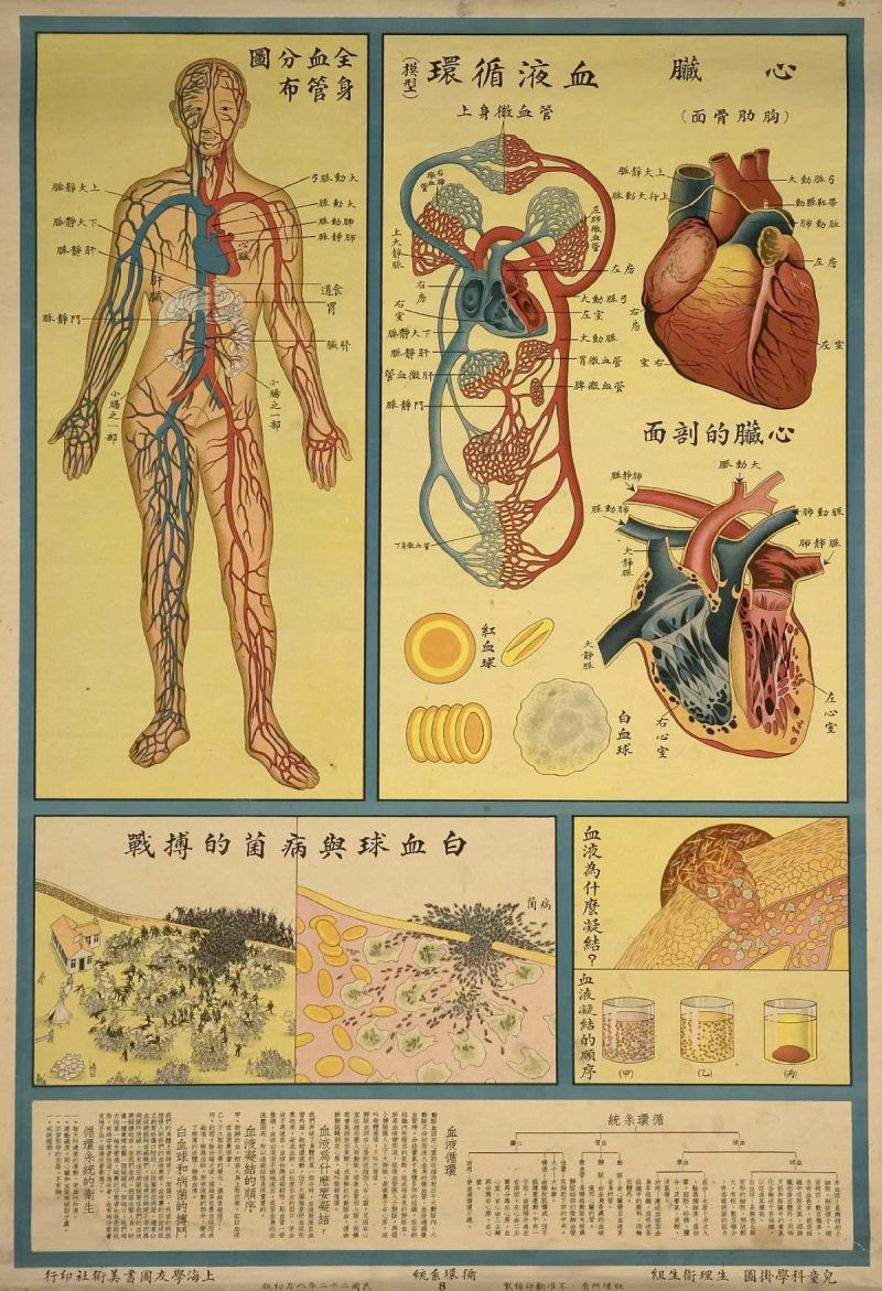 human-body-as- industrial-factory-on-1933-chinese- health-education-posters_7