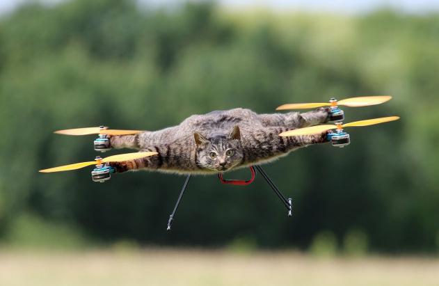weird-taxidermia-drones-cat-ostrich-skunk-1