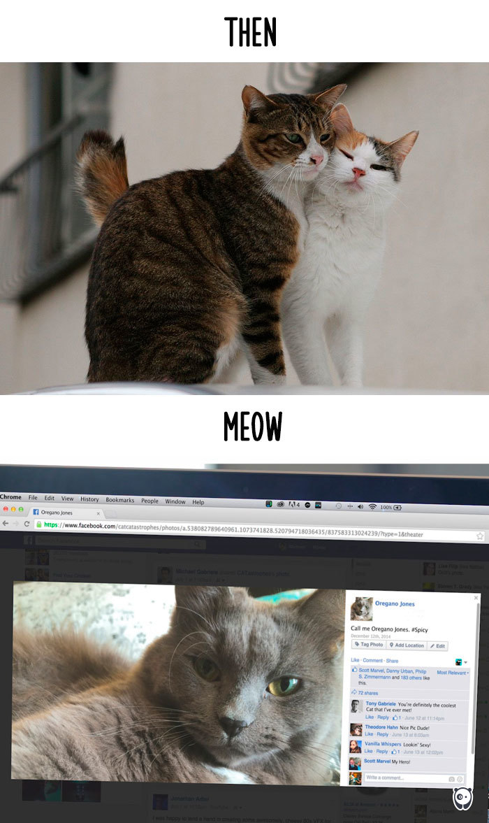 how-technology-has-changed-cats-lives-11