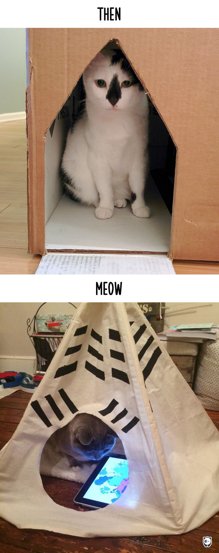 how-technology-has-changed-cats-lives-4