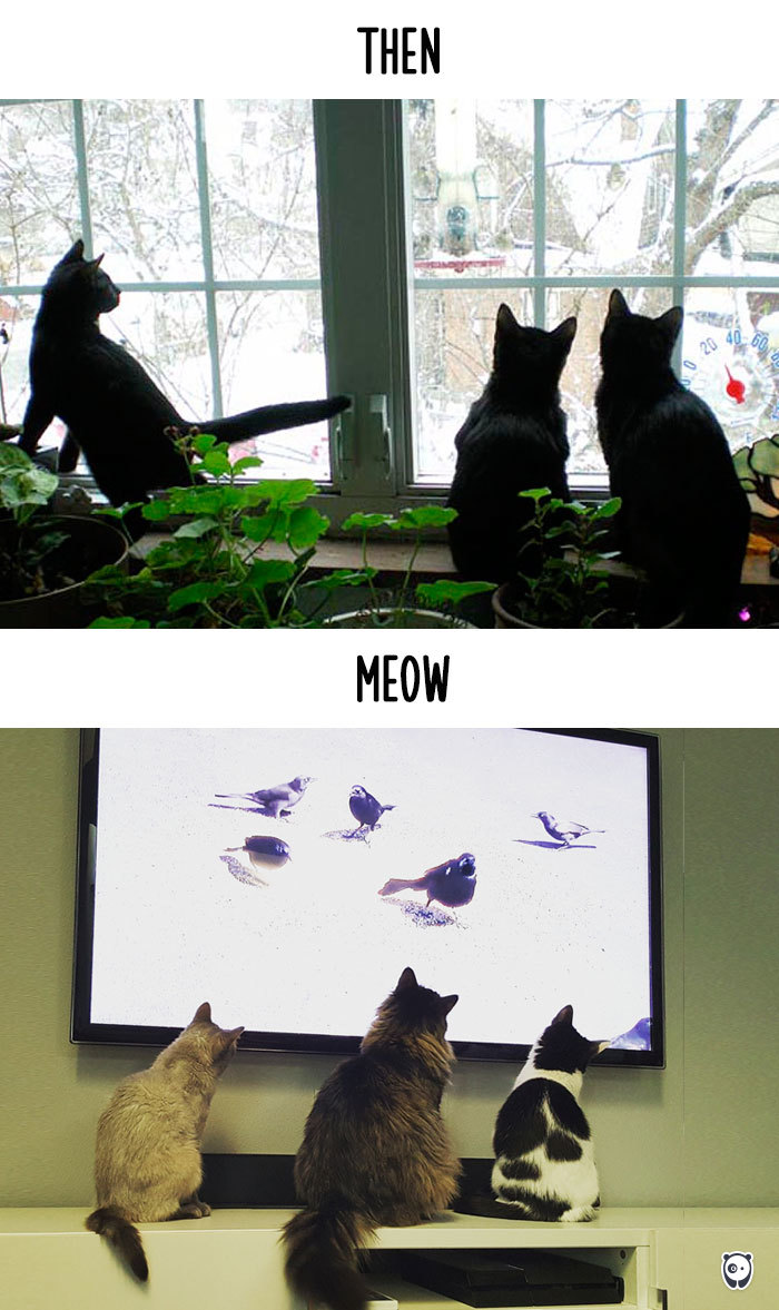 how-technology-has-changed-cats-lives-7