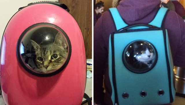 catpack-backpack-for-cats-1