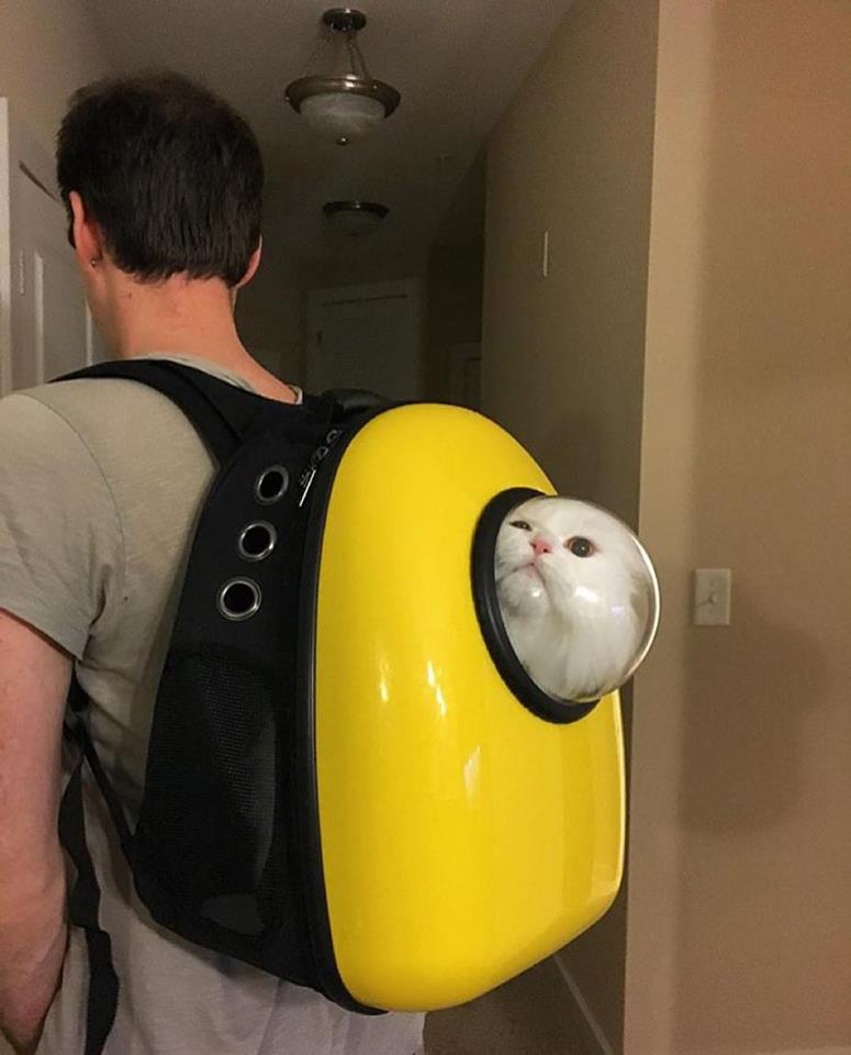 catpack-backpack-for-cats-2
