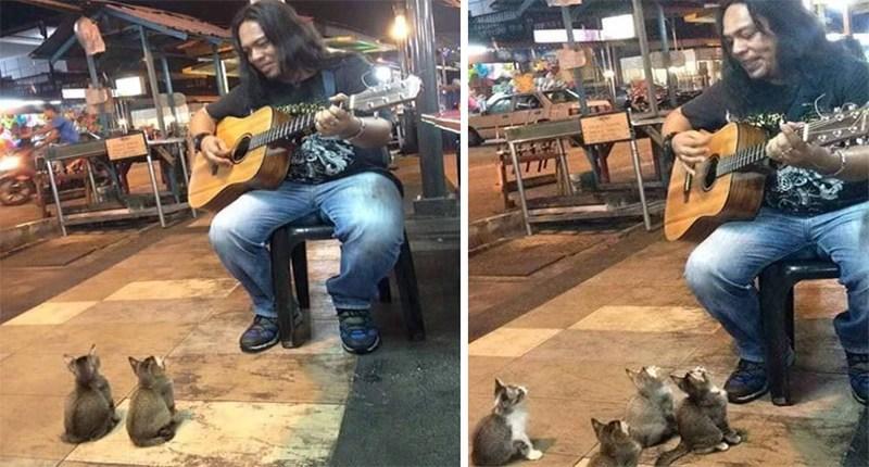 cats-listening-music-street-musician-malaysia-fb