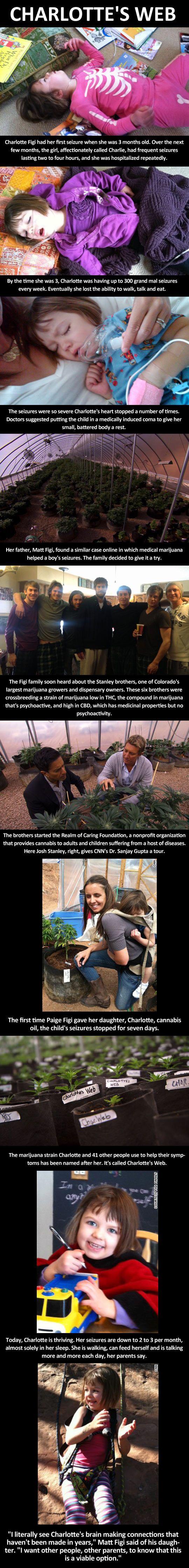 charlottes-web-medical-marijuana