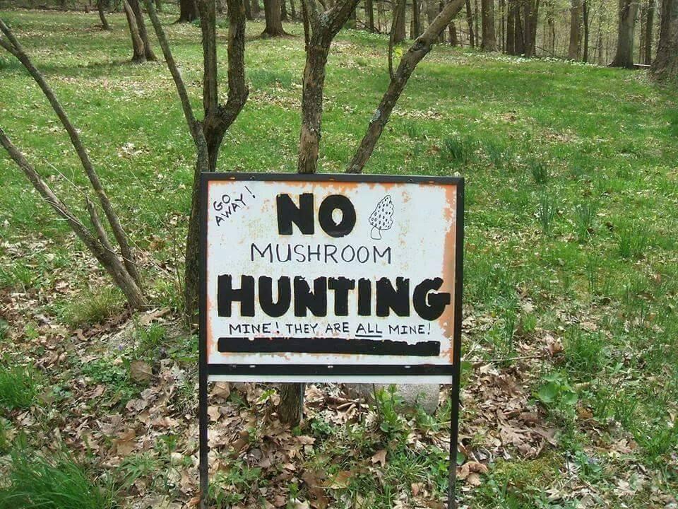 mushroom-ranger