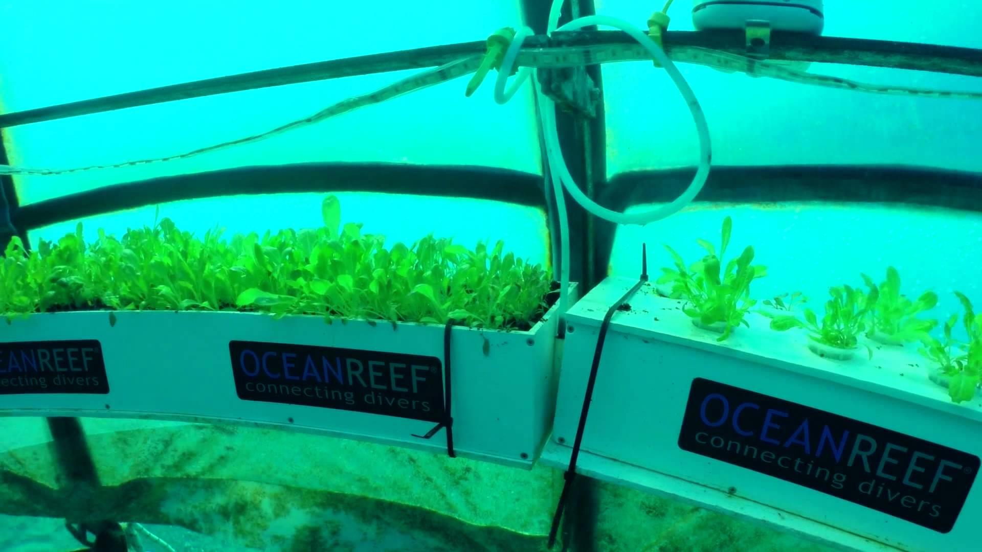 nemo-garden-underwater-biosphere-2