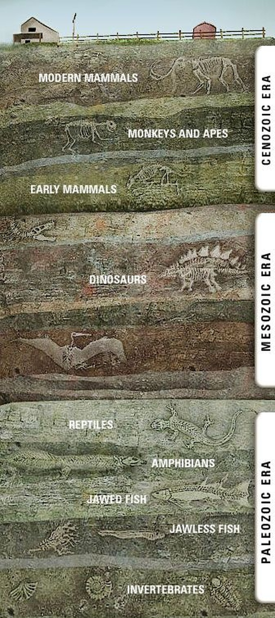 fossils-layers-under-you-2