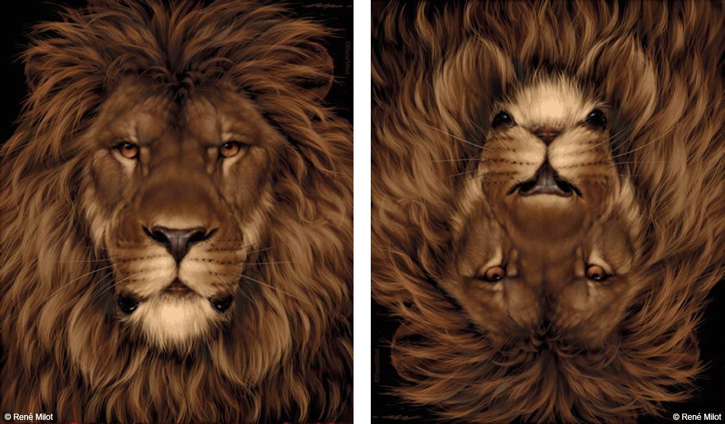 lion_mouse_illusion_optical_art_milot