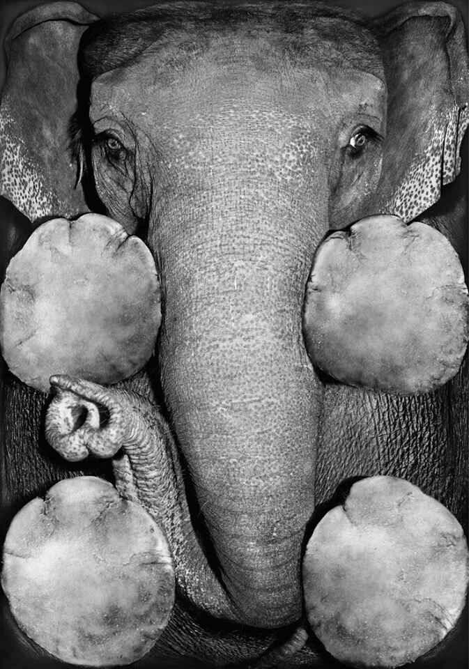 elephant-from-below