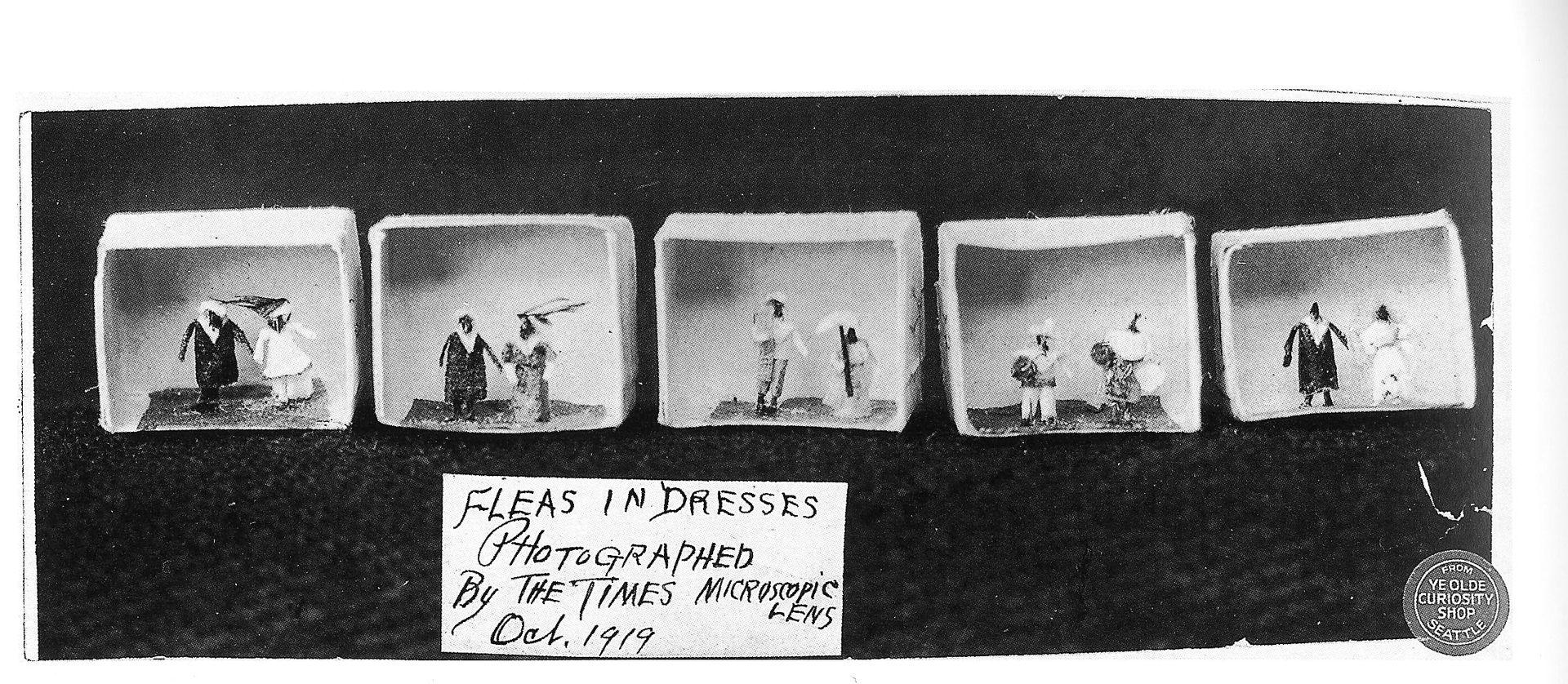 flea-circus-poster-clothes