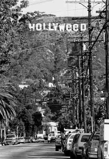 hollyweed-sign-3
