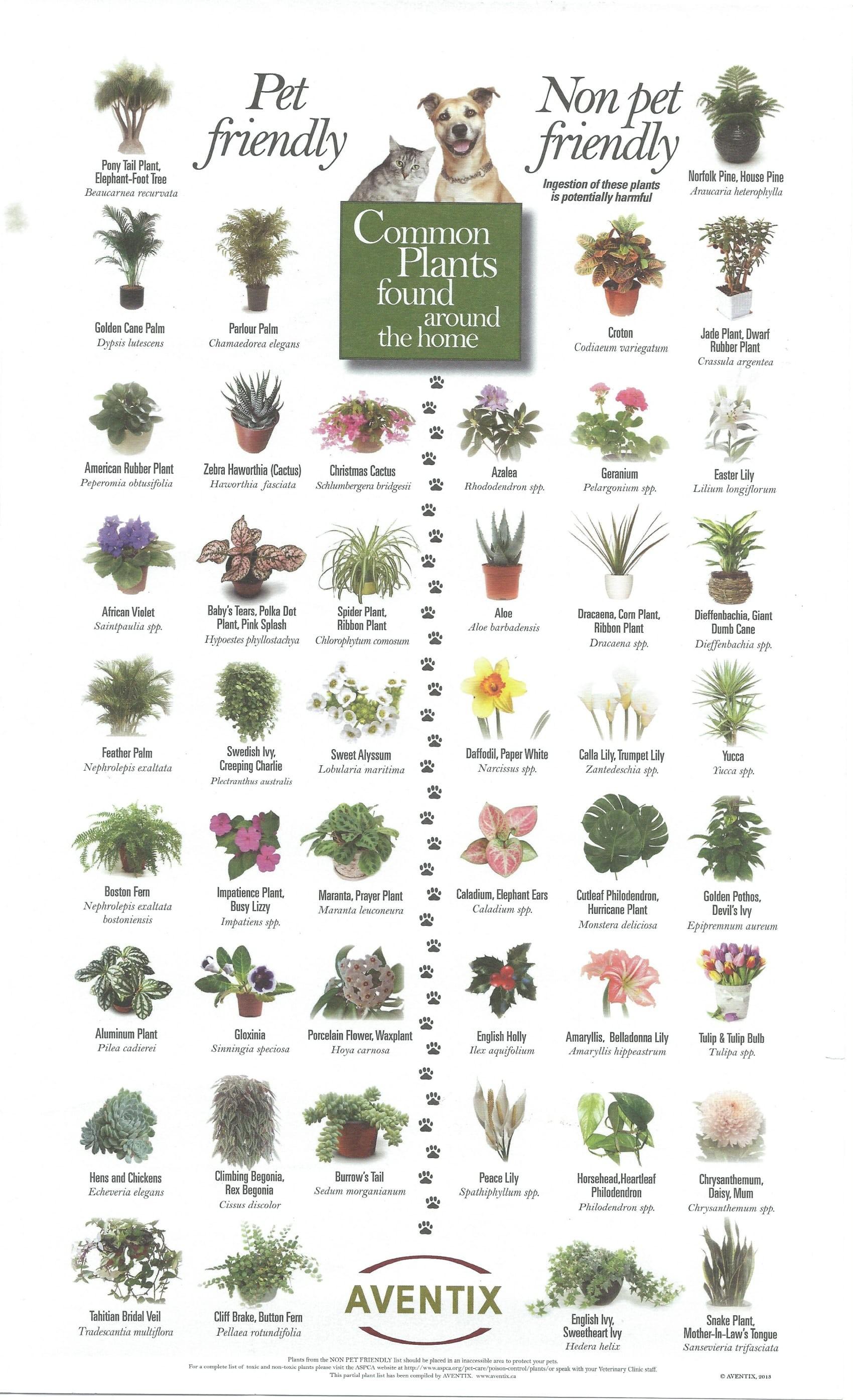 pet-friendly-plants