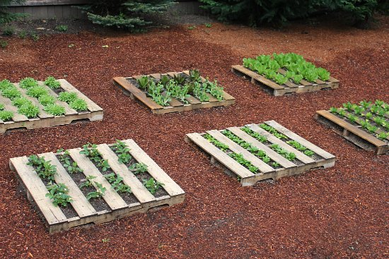How To Build Garden Beds From Pallets