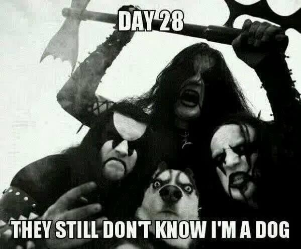 10 best heavy metal memes earthly mission Heavy Metal Skull Heavy Metal Band Logos
