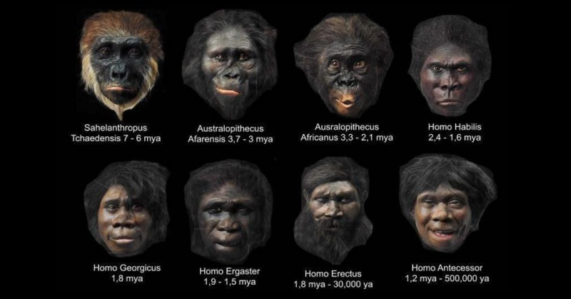 Early Humans Evolution The Faces of Early Man...