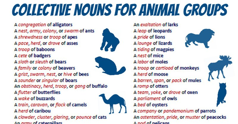 collective nouns for animal groups earthly mission
