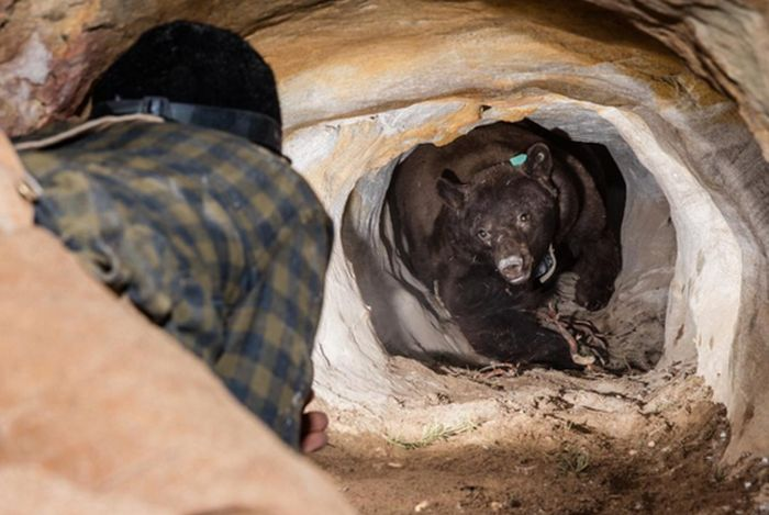 man meets bear in cave