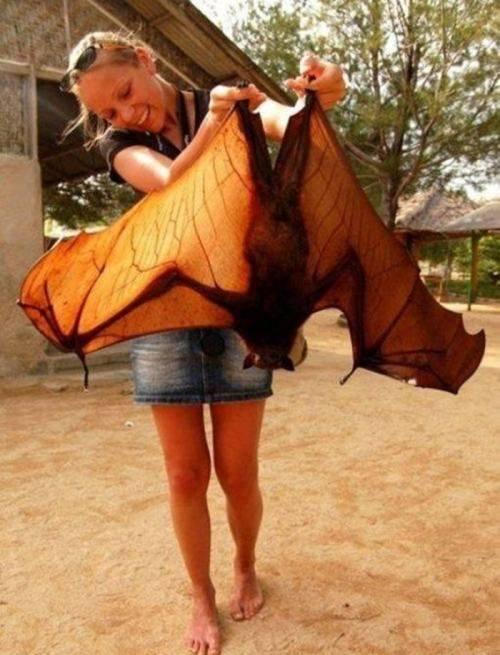 batman huge bat