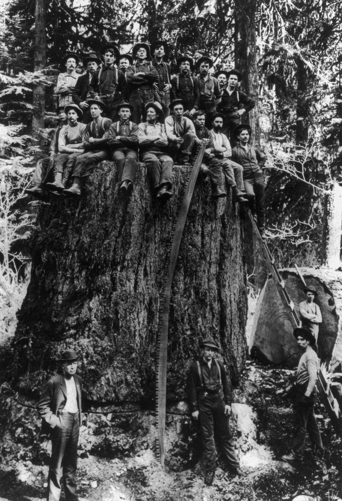 Those Old School Lumberjacks That Fell America S Giant