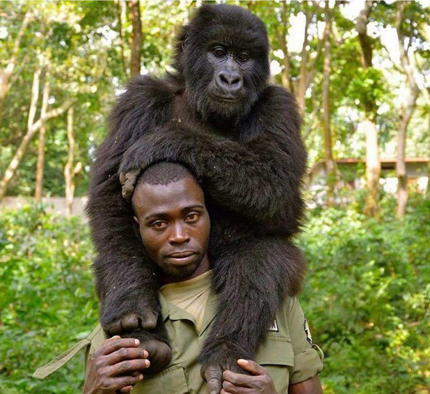 selfie with gorilla