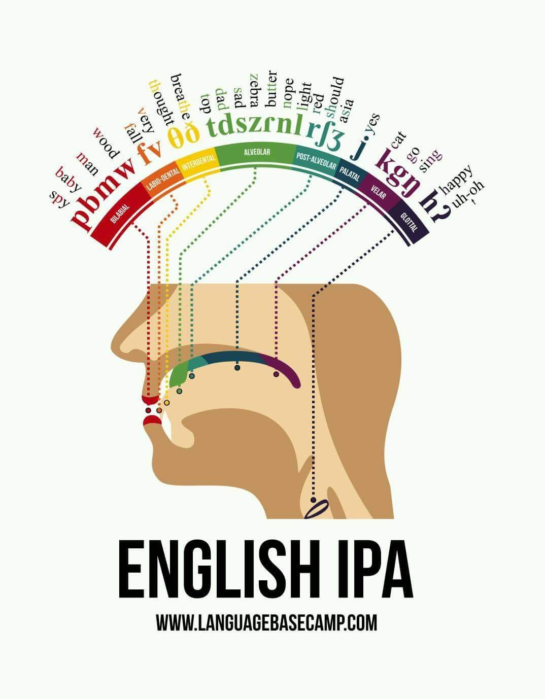 Phonetic Map of the Human Mouth