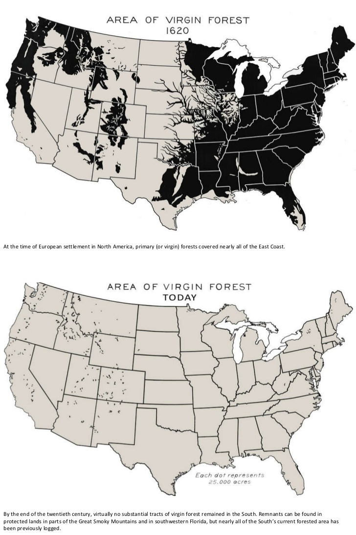Area of Virgin Forest in the USA: 1620 vs Today