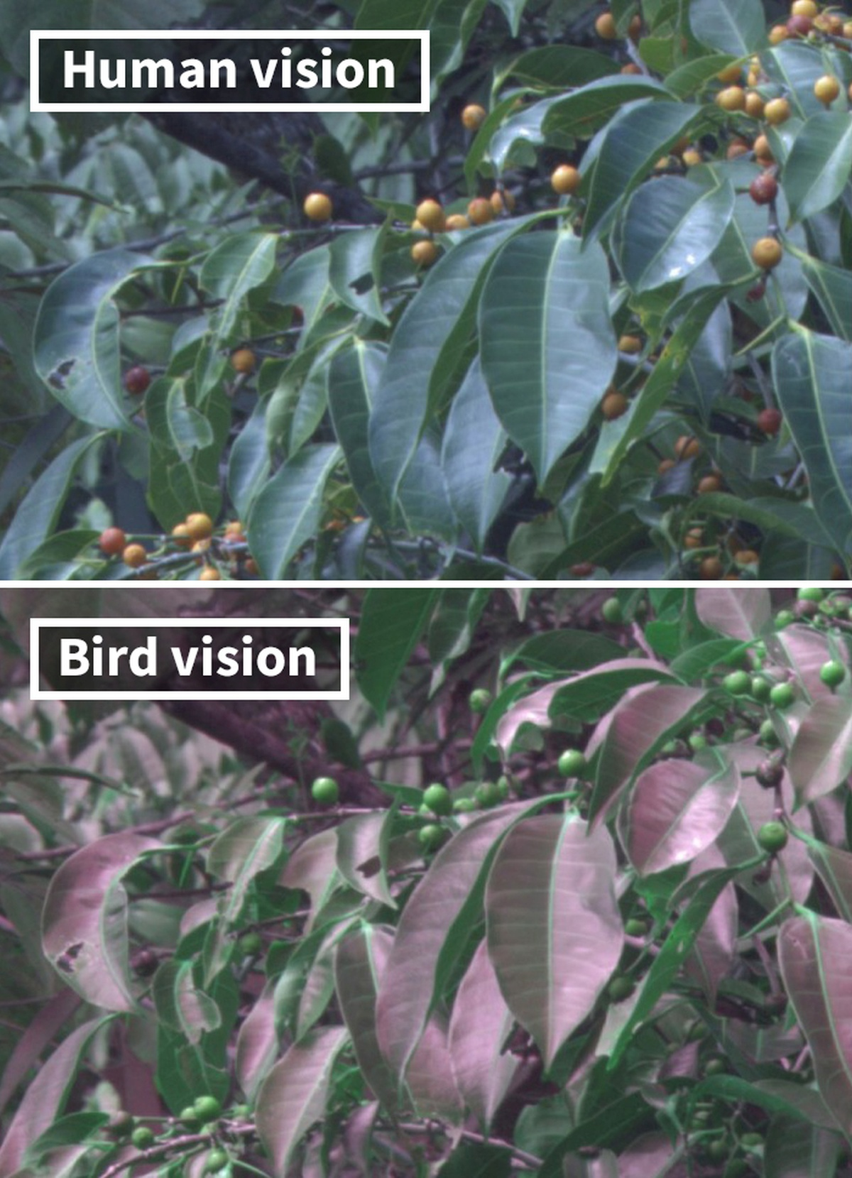 Human Vision vs Bird Vision