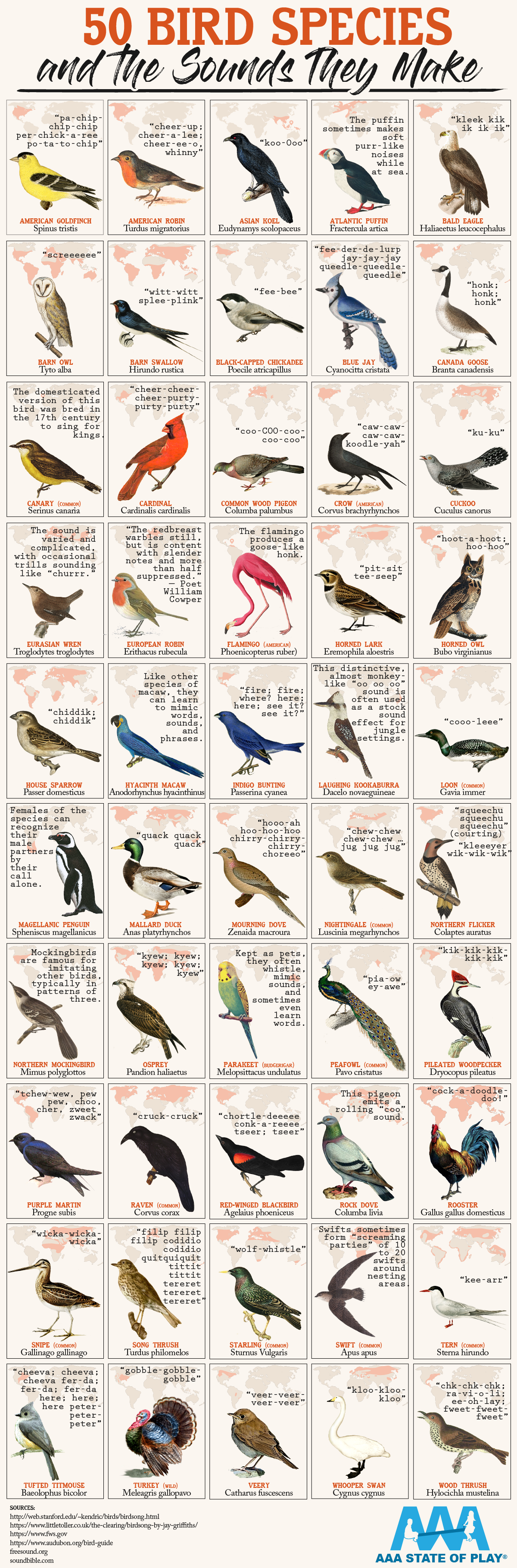bird sounds infographic