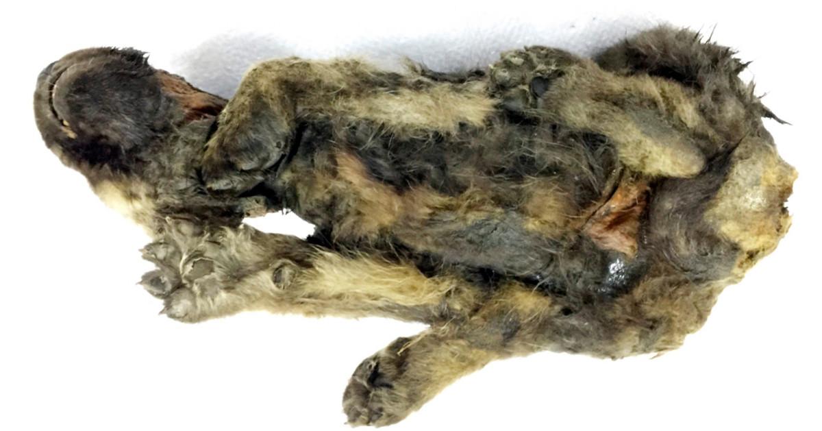 world oldest dog
